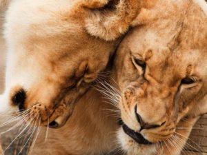 Надзор в области обращения с животными
