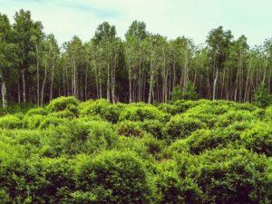 Признаки неиспользования земельных участков
